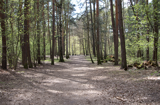 grunewald